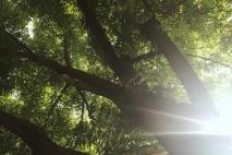 ״השמש שלי״