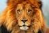 בני מזל אריה