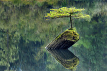 עץ נודד קטן