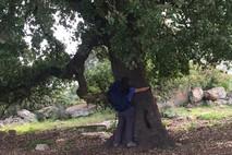 עץ ועצה