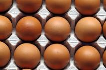 הביצים הישראליות הן מהטובות בעולם