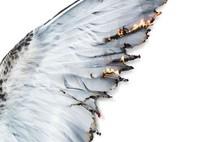 ובעודך שבור כנף