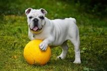 פסיכולוג כלבים - באמת יש דבר כזה?