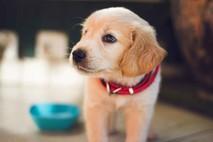 חנות חיות בפתח תקווה שאסור לכם לפספס