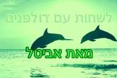 לשחות עם דולפינים