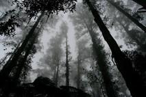 עמוק בתוך היער (18+)