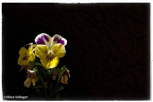 צילום : שירה סלינג'ר