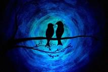 ציפורי אהבה