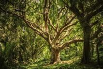 שיחות נפש: העץ