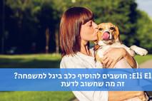 צפו: דברים שחשוב לדעת לפני שמאמצים כלב ביגל
