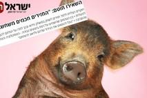 המחקר בחזירים הניב תוצאות מפתיעות