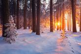 החורף