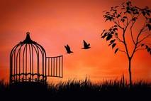 החופש שלי הוא גם הכלא שלי
