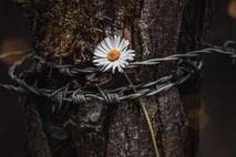 גן עדן של פרחים