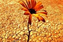 פרח נוי במדבר - פרק 2 - ההפלגה