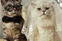 אנחנו לא נתחתן?
