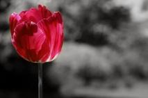 הפרח הטורף
