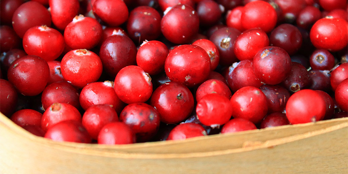 Cranberries, small doses of vitamins for summer