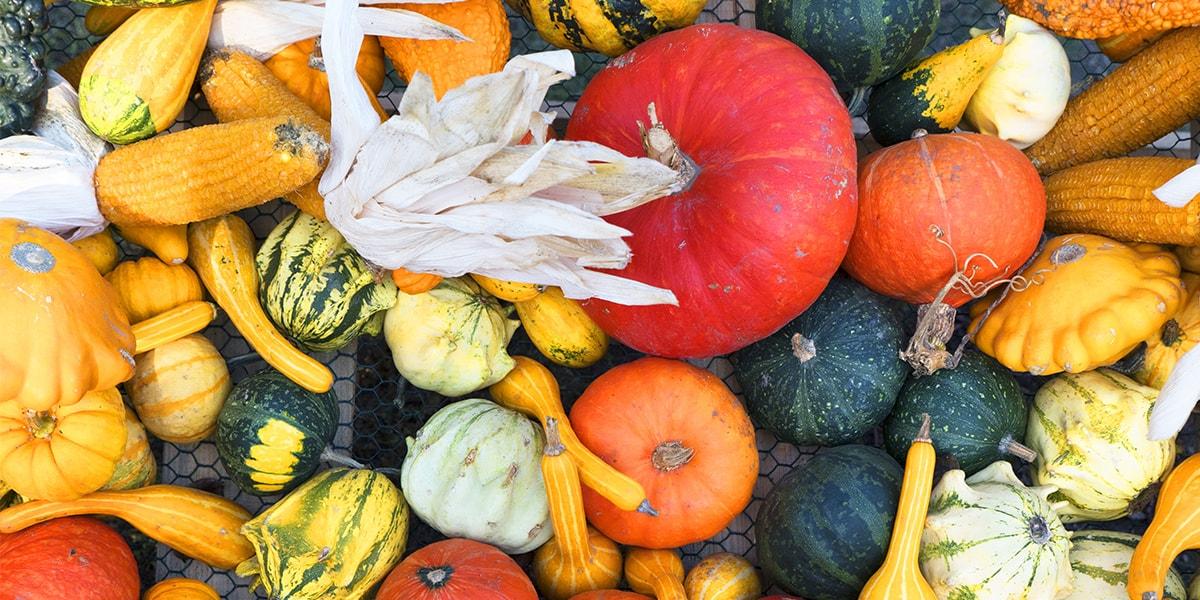 Naranja: el color del invierno. ¡Descubre por qué!