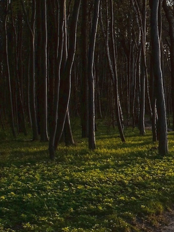 Waldbestattung von November