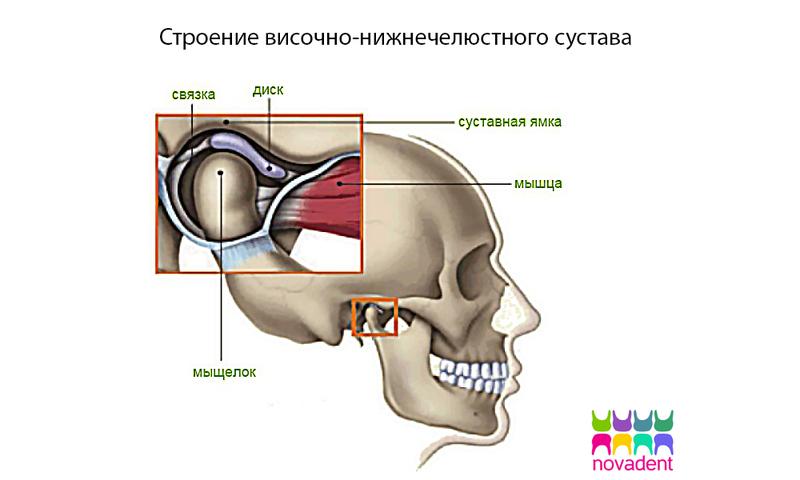 височно-нижнечелюстной сустав, внчс, гнатология