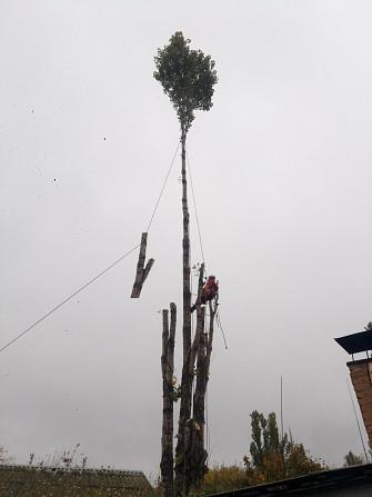Спил дерева,демонтаж работы,земляные работы в ручную Одеса - зображення 1