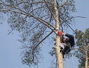 Удаление Деревьев, Обрезка Деревьев, Спил Дерева В Черкасской Области и Золотоноше Київ