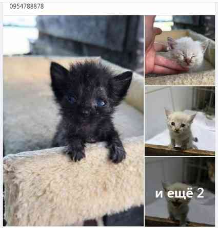 Котята нуждаются в помощи и семье, котенок Харків