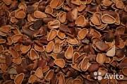 Продаём скорлупу кедрового ореха Харків