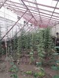 Продам Тепличный Комплекс в Нерубайском Одеса