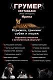 Грумер Харьков - Песочин , Стрижка собак и кошек Харків