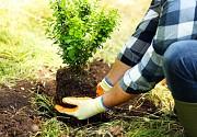 Професійні послуги садівників, обрізка саду, автополив, озеленення 2021 Київ
