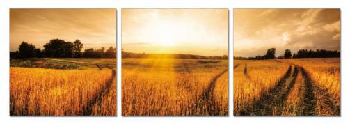 Posters Obraz na zeď - Sluneční záře nad polem, (150 x 50 cm)