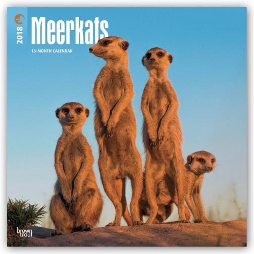 Kalendář 2018 Meerkats