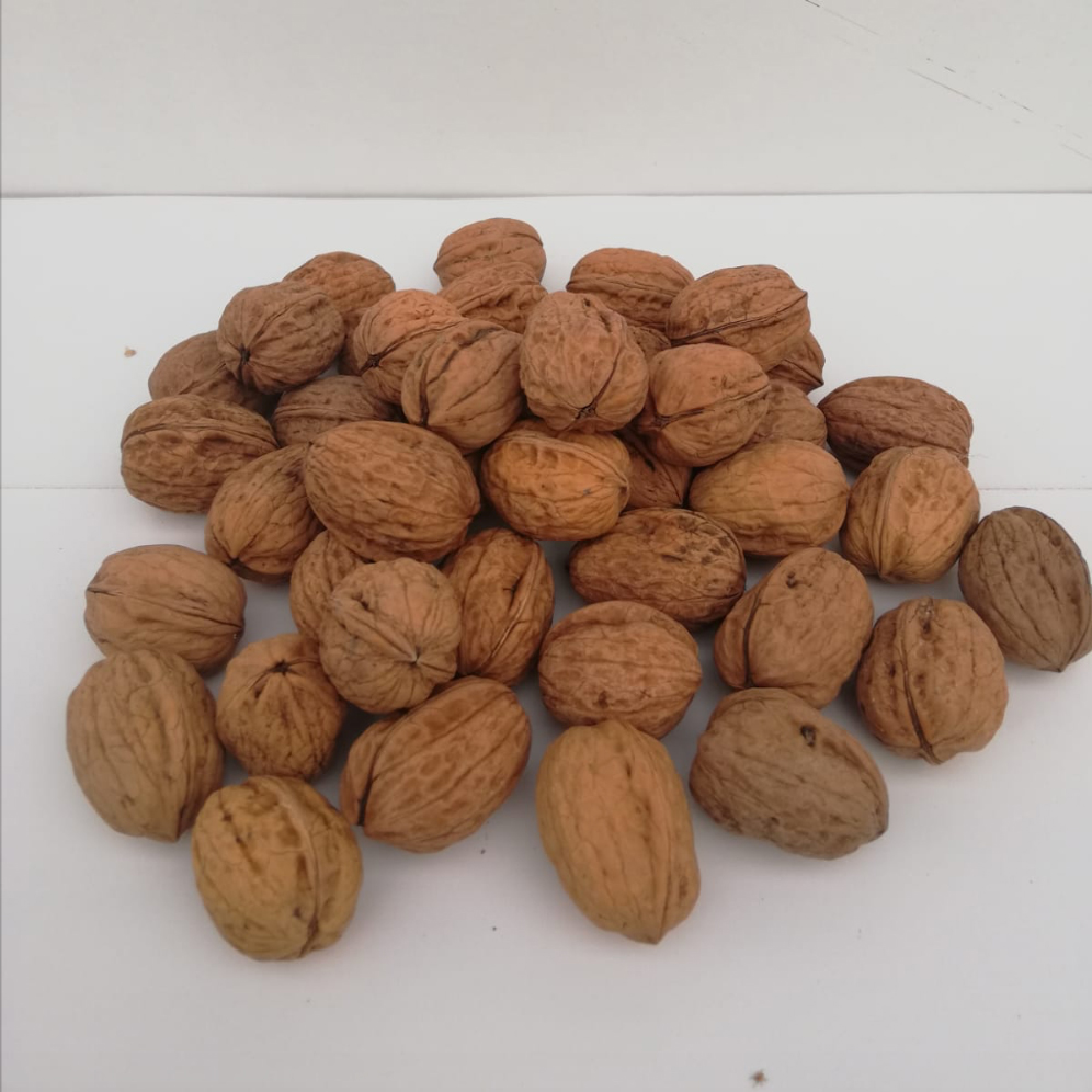 NUECES LA ROTURA
