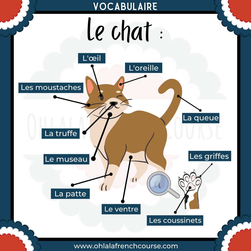 French cat vocabulary