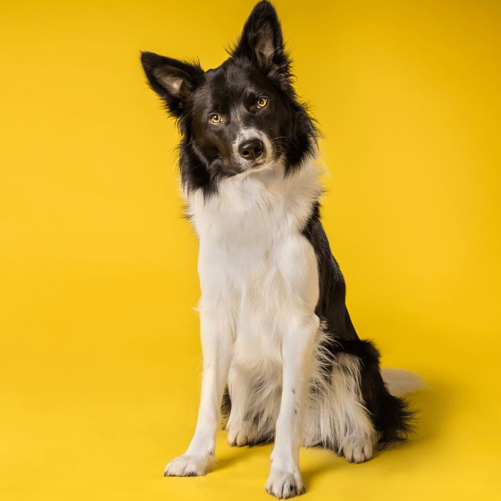 Avoir une vie de chien - French idiomatic expression