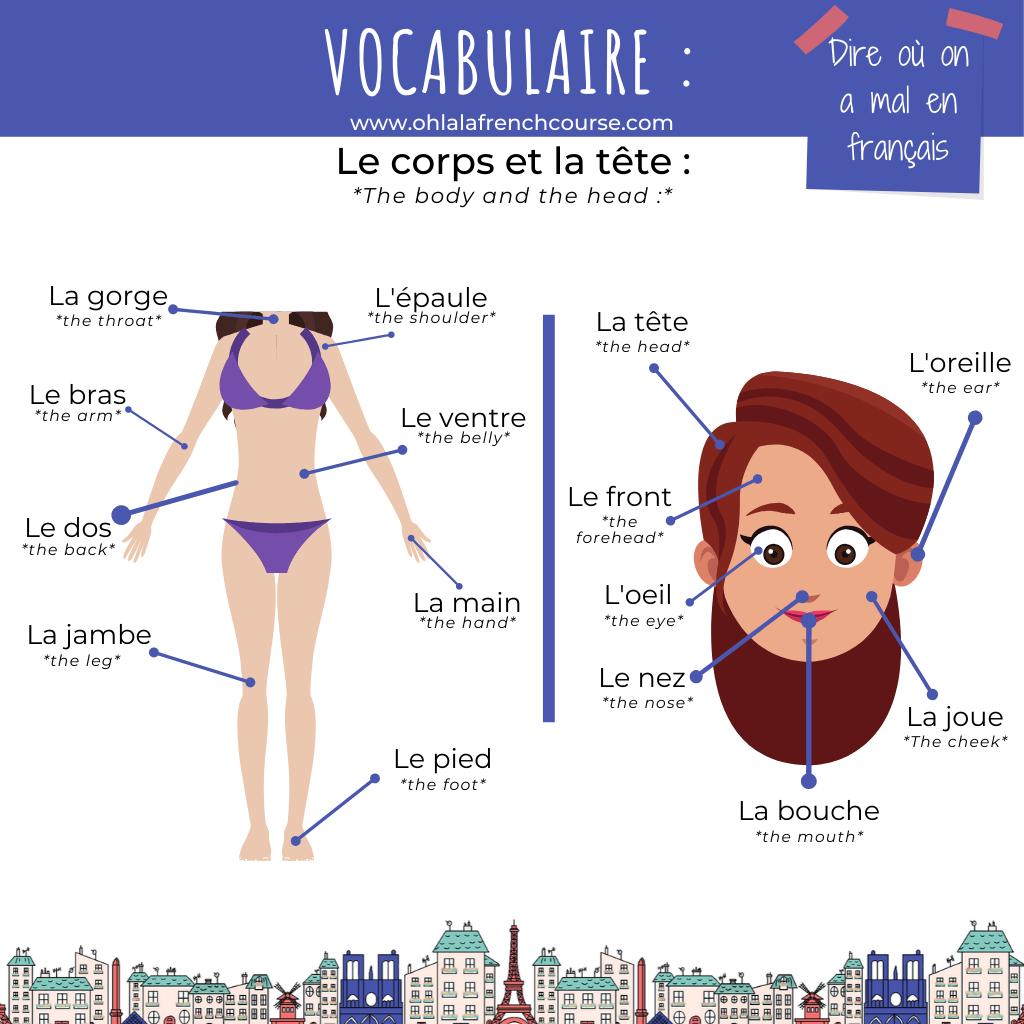 Le corps et la tête en français