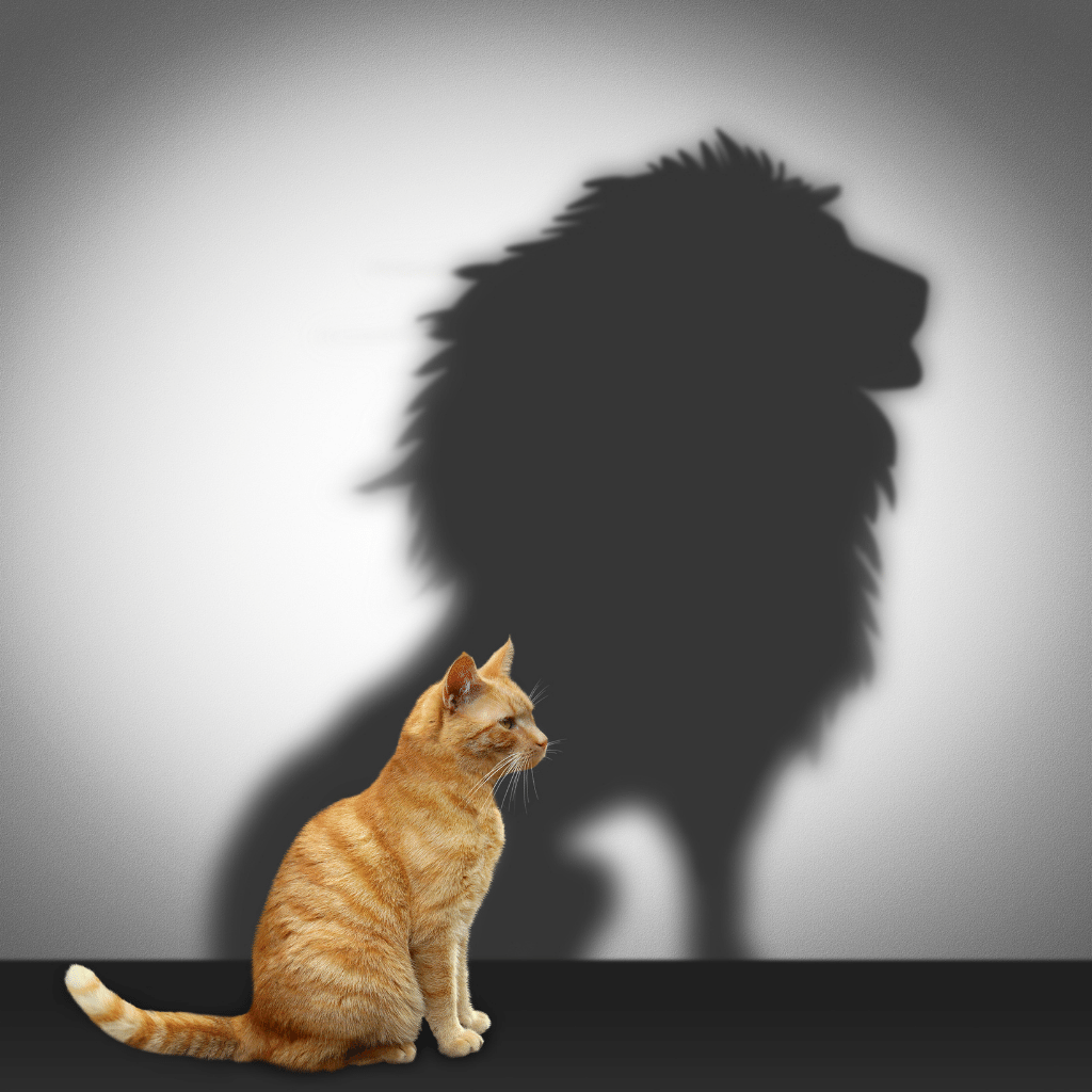 French Idiomatic Expression - Manger du lion