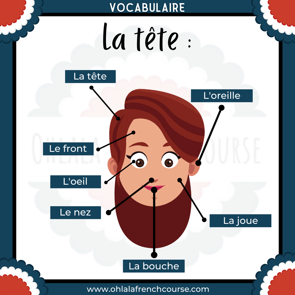 Vocabulary of the head in French