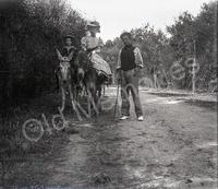 Promenade en âne