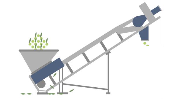 Blätterentfernung bei Oliven