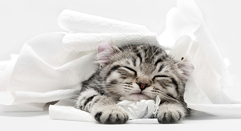Blaasontsteking bij de kat