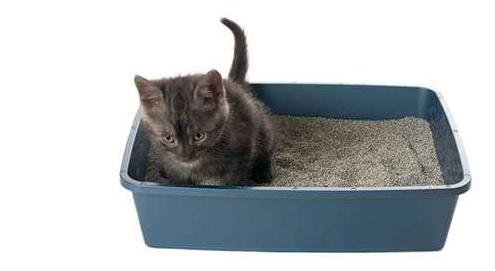 Blaasgruis en blaasstenen bij de kat