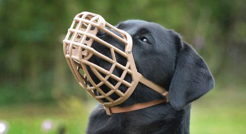 Braucht Ihr Hund einen Maulkorb?