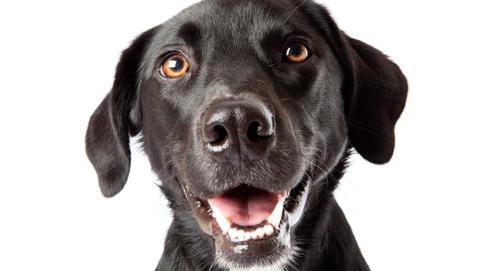 Gebitsverzorging bij honden