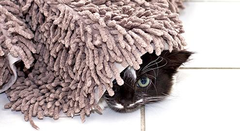 Hilfe! Meine Katze uriniert ins Haus. Was jetzt?