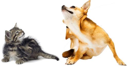 Hotspot bei Hund und Katze