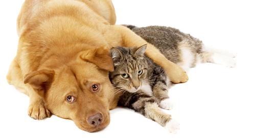 Lintworm bij hond en kat