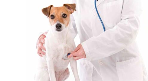 Luchtwegaandoeningen bij hond en kat